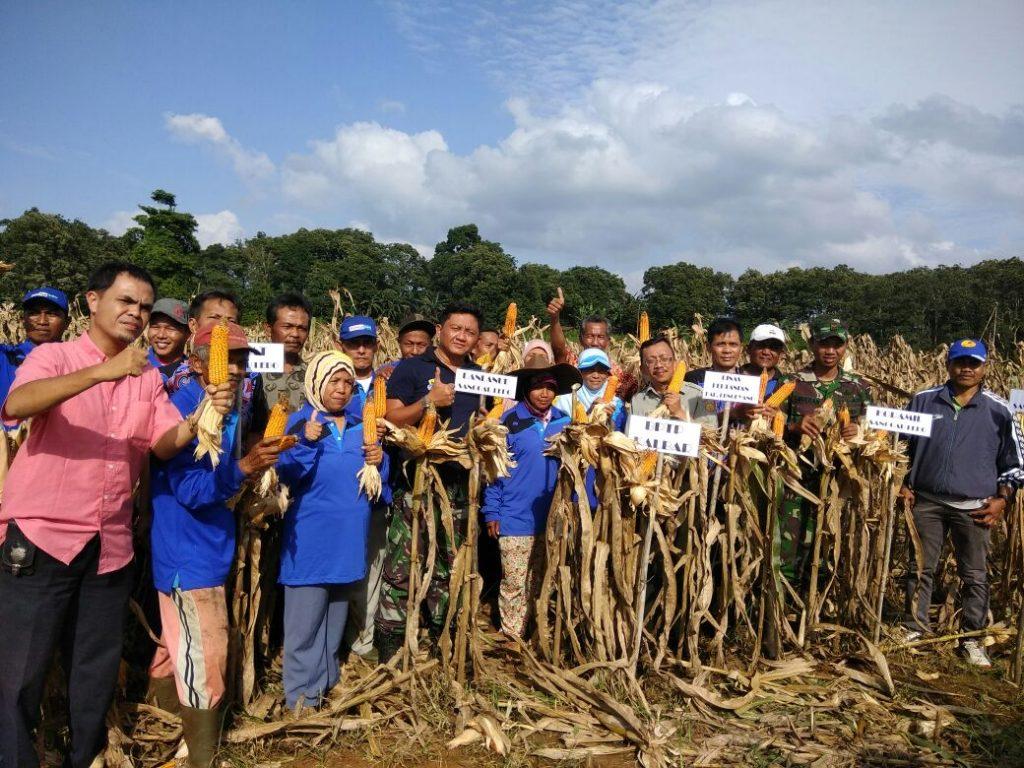 Panen Jagung Kelompok Sathia Tani Lanud HAD Bersama BPTP Kalbar