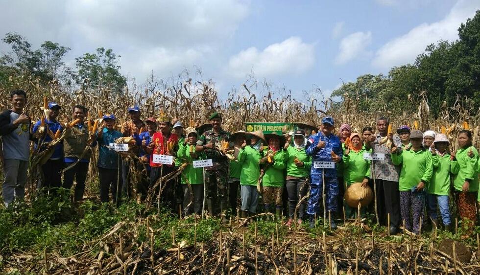 Panen Jagung NK212 di Wilayah Lanud Had