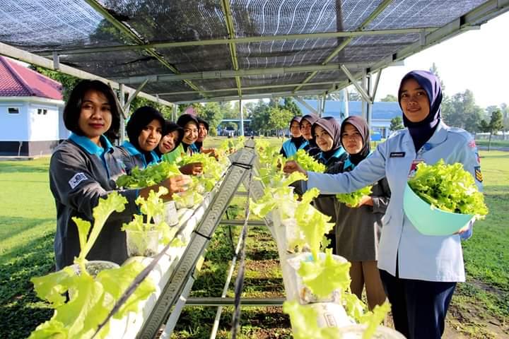 Personel Lanud J.B. Soedirman Nikmati Hasil Panen Sayuran Hidroponik