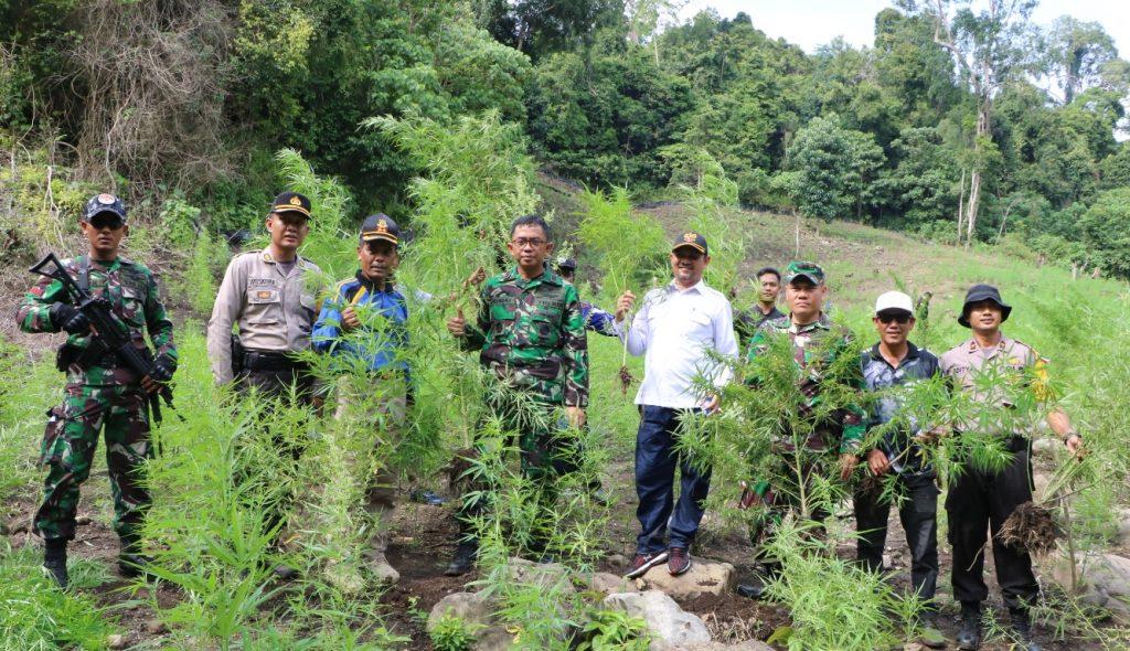 TNI Polri Musnahkan 5 Hektar Ladang Ganja Di Aceh Besar