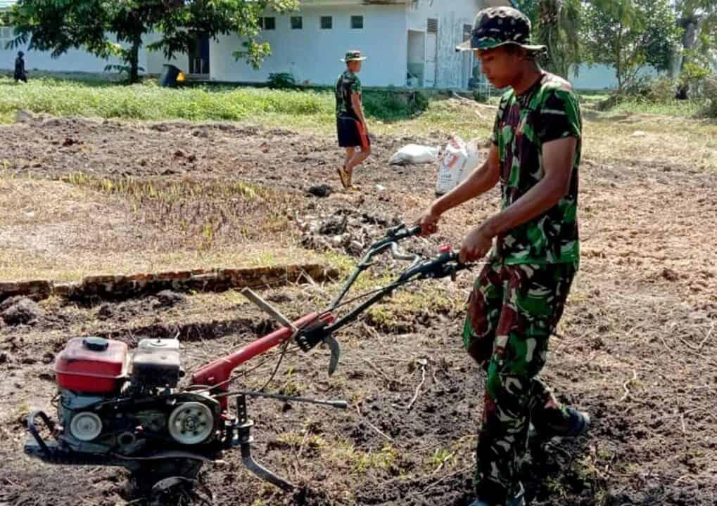 Antisipasi Pangan, Batalton Komando 462 Paskhas Manfaatkan Lahan Kosong Untuk Program Ketahanan Pangan