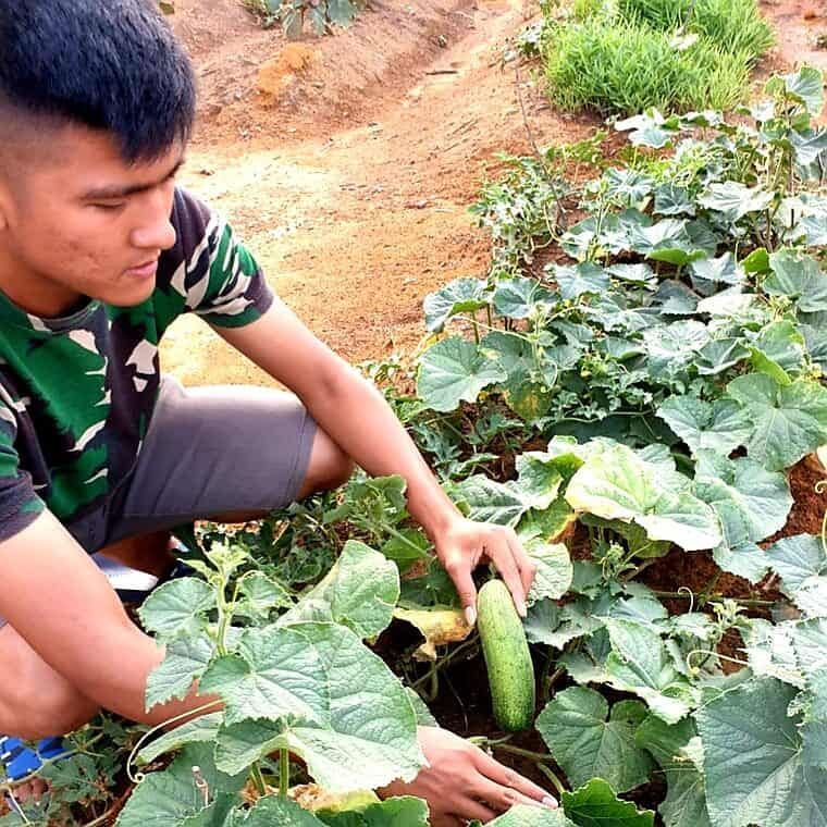 Lahan Kosong Mess Prajurit, Letkol Urip: Tanami Sayur – Sayuran