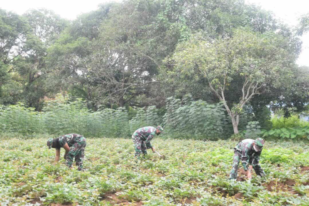 Prajurit Mawing II Paskhas Manfaatkan Lahan Kosong Sebagai Lahan Pertanian