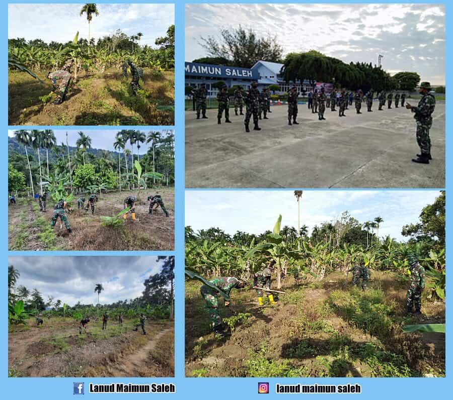 Prajurit Lanud Maimun Saleh Manfaatkan Lahan Untuk Ciptakan Ketahanan Pangan Di Daerah Paya Seunara Sabang.