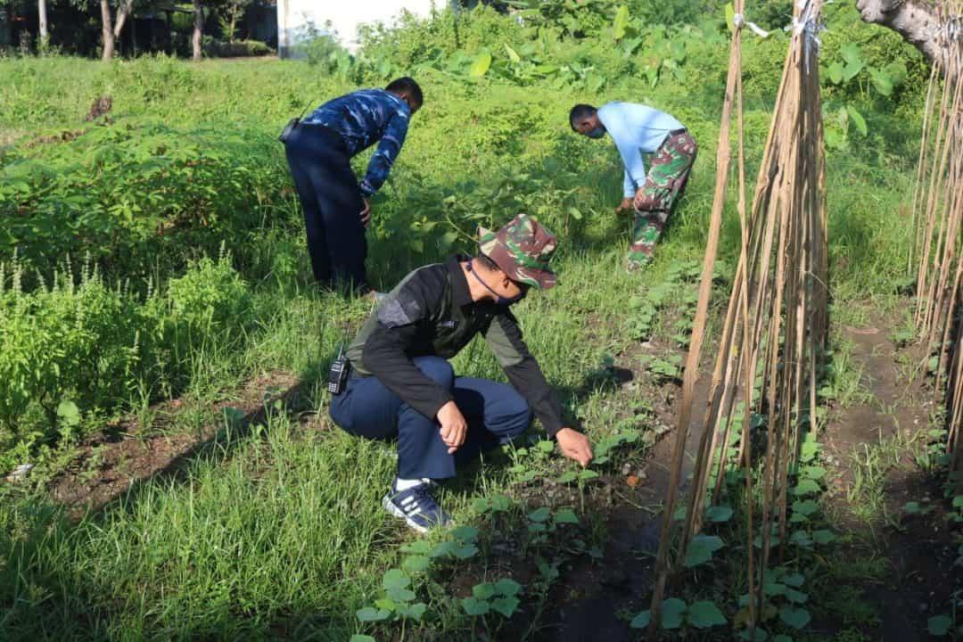 Lanud Sugiri Sukani Melaksanakan Program Ketahanan Pangan Dalam Rangka Mencegah Efek Buruk Pandemi Covid-19
