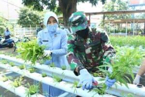Jaga Kestabilitasan Ketahanan Pangan, Dankoharmatau Panen Perdana