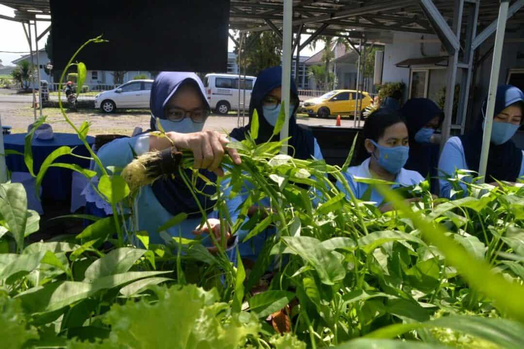 Dukung Program Pemerintah Ketahanan Pangan PIA Ardhya Garini Cab 04/ D.I Lanud Husein Sastranegara Panen Sayuran Hidroponik.