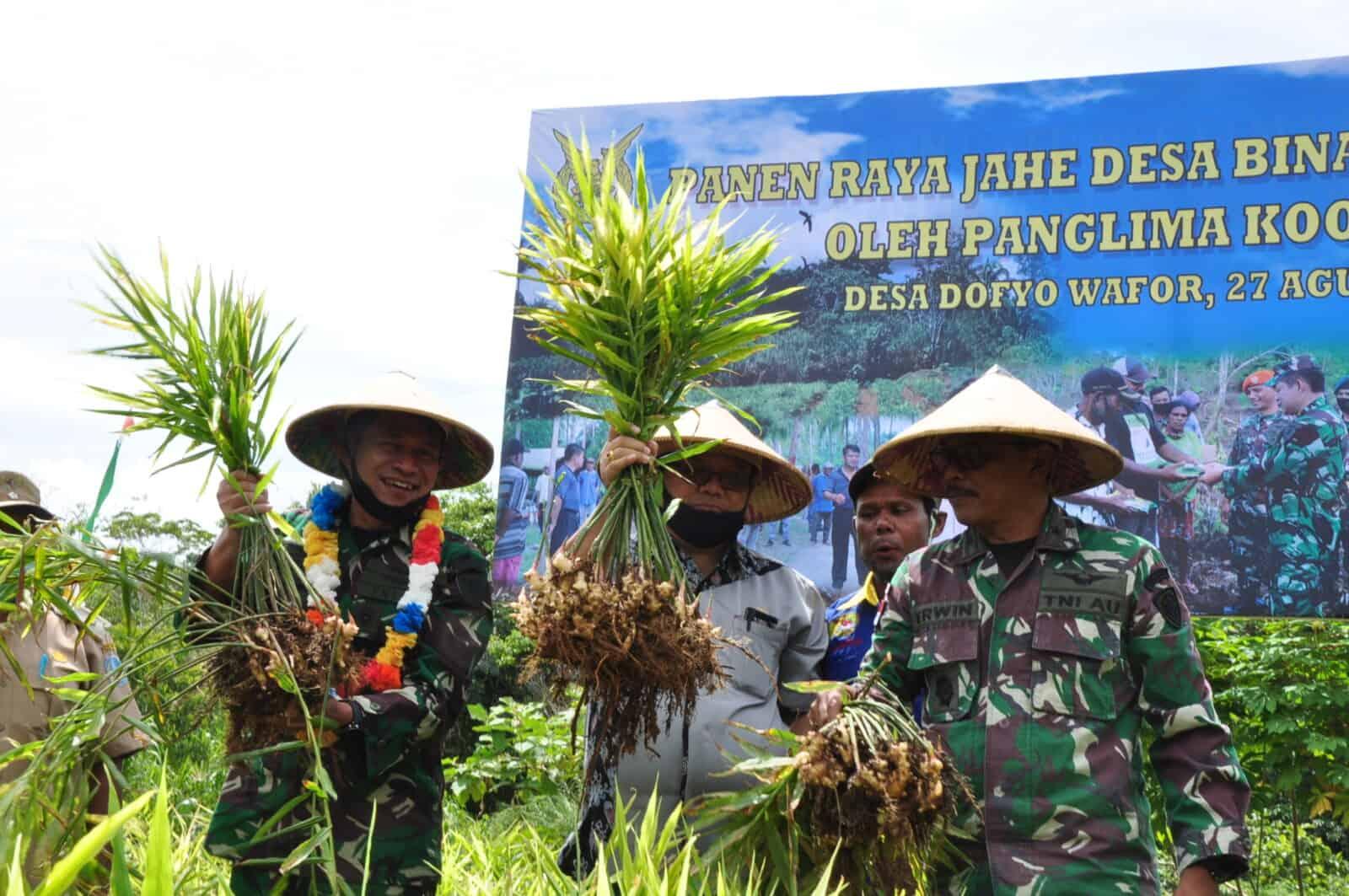 Panen Raya Jahe Desa Binaan Koopsau III di Desa Dofyo Wafor Kabupaten Biak Numfor