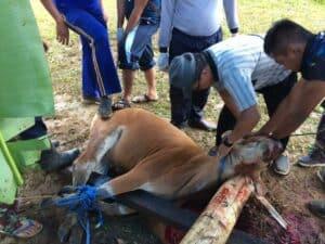 Lanud Pattimura Berbagi Daging Kurban Untuk Warga Sekitar