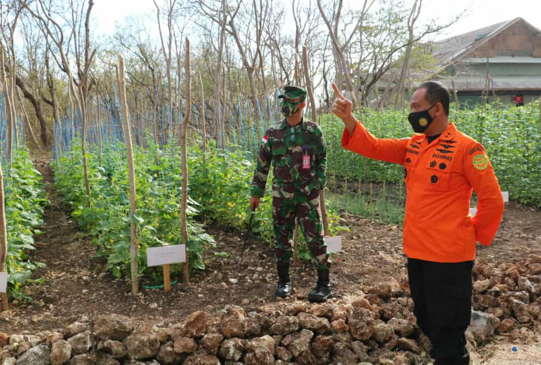 Deputi Sarana Prasarana dan Sistem Komunikasi Pencarian dan Pertolongan Tinjau Lahan Gersang Diubah Jadi Kebun Sayur oleh TNI AU Lanud El Tari