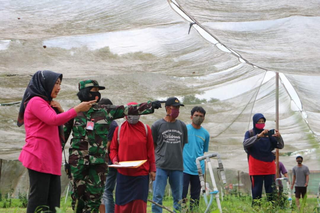 Dinas Ketahanan Pangan Pekanbaru Survey CPCL di Kebun Mustang Lanud Rsn