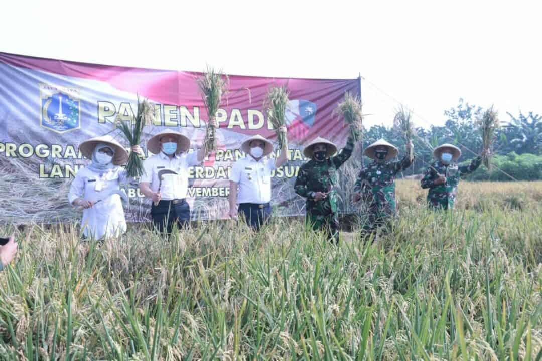 Panen Padi Perdana di Ibukota, Pangkoopsau I bersama Wagub DKI Jakarta di Lanud Halim Perdana Kusuma