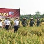 Panen Padi di Lanud Halim Perdanakusuma Wagub DKI Apresiasi Upaya Koopsau I dan Lanud Halim