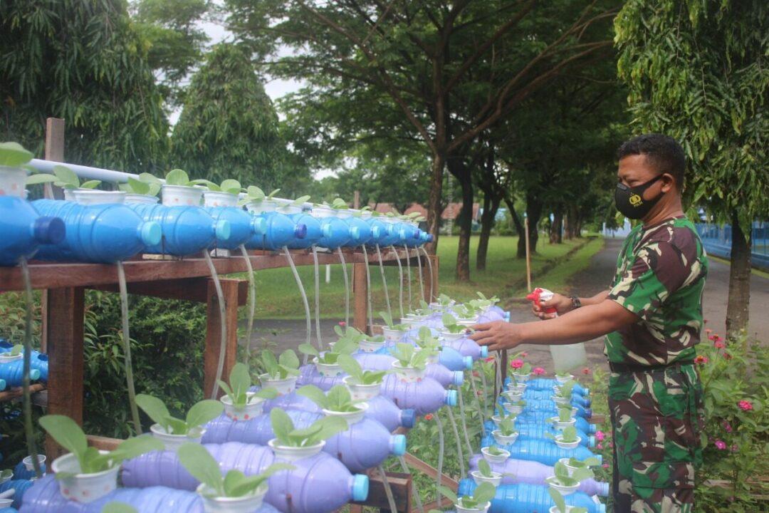 Serka Supandi Memanfaatkan Halaman Rumah Untuk Menanam Sayuran Pokcoy