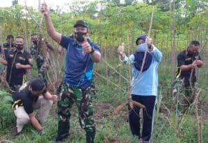 Personel Lanud Pangeran M. Bun Yamin Gotong Royong Panen Singkong