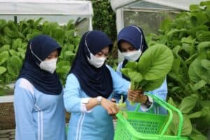 Dukung Program Ketahanan Pangan Berkelanjutan, Danlanud Iswahjudi Panen Sayuran Dan Ikan Gurami