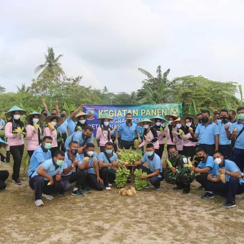 Program ketahanan pangan Lanud H AS Hanandjoeddin Panen Tanaman Hortikultura